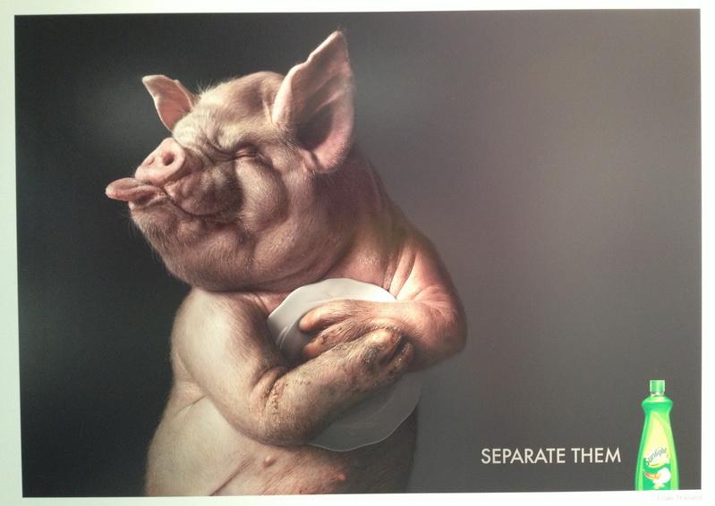 Pig Sunlight Dishwasher
