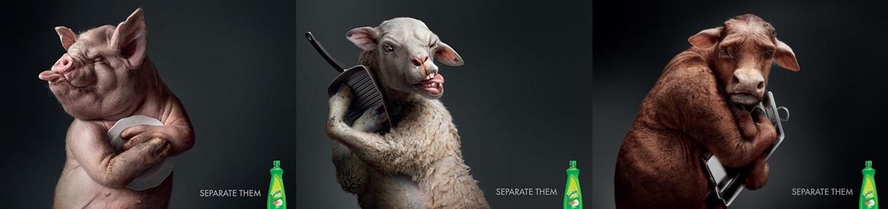 sunlight-pig-horz