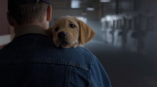 Puppy Love budweiser commercial 2