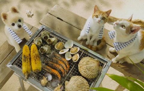 jalan cat tourism