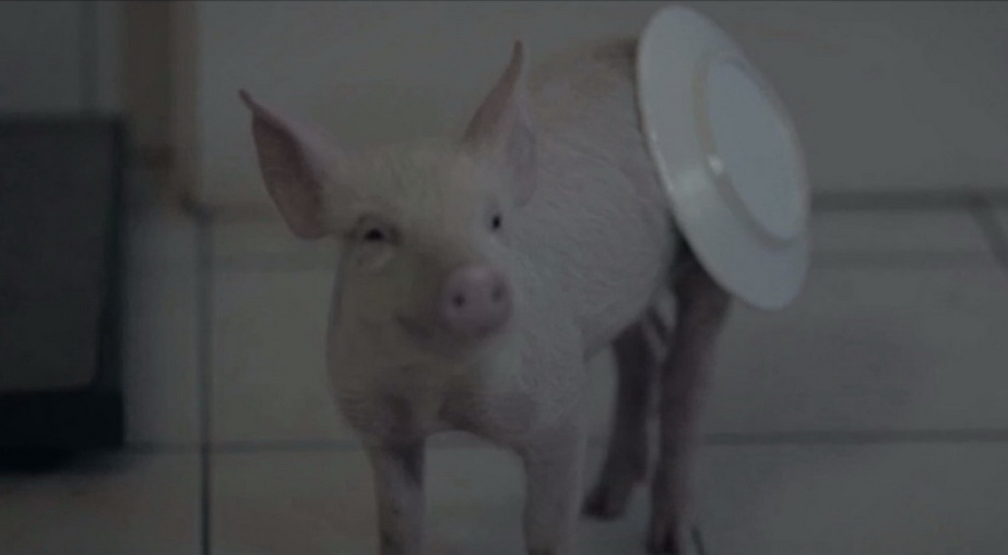 pig sunglight TVC 2