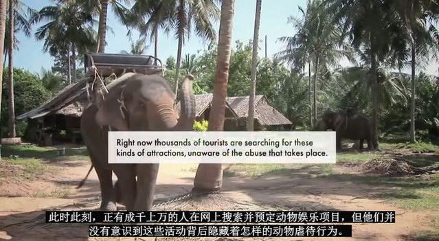 elephant33