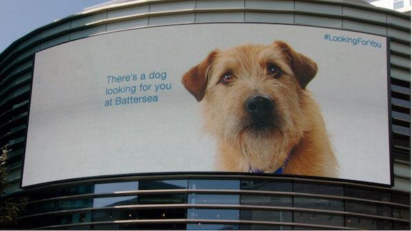 billboarddog1
