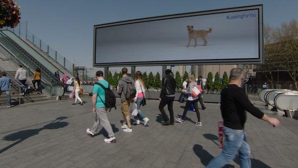 billboarddog3