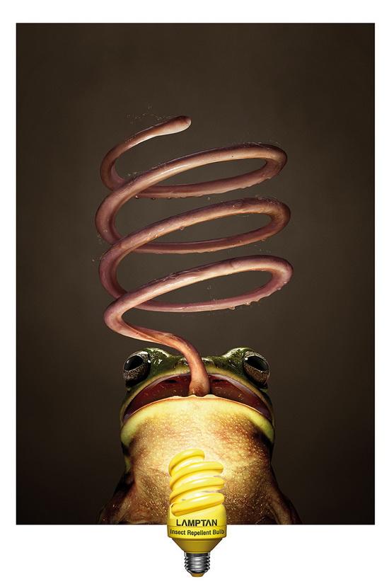 lamptan-frog om