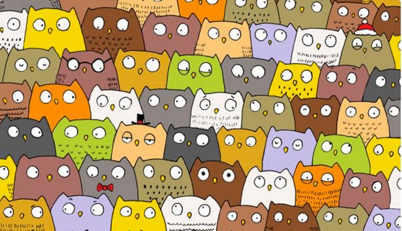 cat-in-penguines-head
