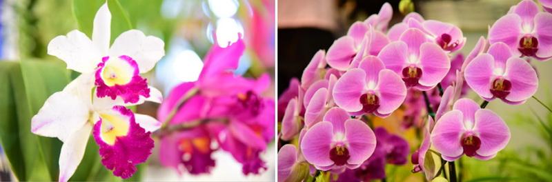 siam paragom สวนดอกไม้ 2559